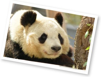 パンダが好きな2年生Tさんの1週間